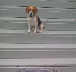 Trouble in Toby Land, The Beagle Chronicles