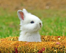 This bunny is from Photobucket. By Rocandy Baby Bunny
