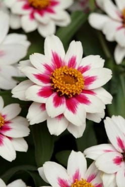 Top Rated Flower Choices
