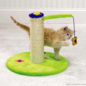 Playing - the best way to teach a kitten use the scratching post! (c) spoilurpets.com