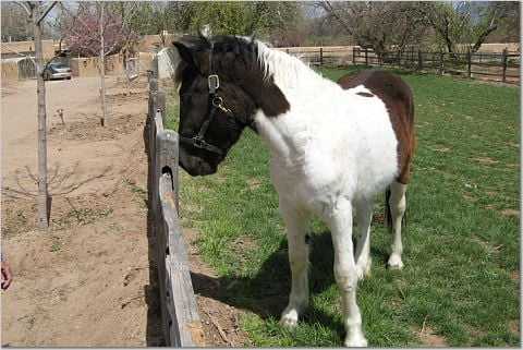 Developing into Beautiful Horse
