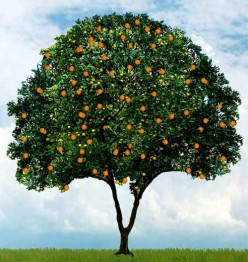 History and Origin of Oranges - Orange Oil Benefits