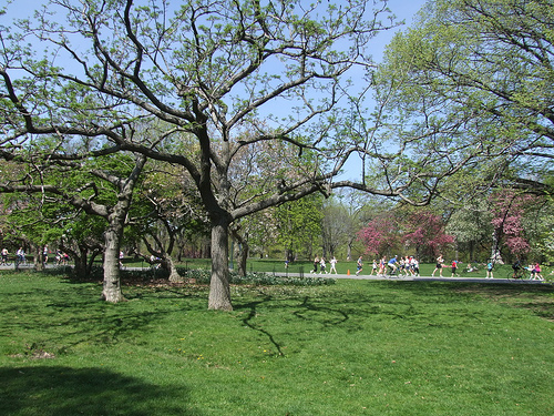 Running in Central Park    Source: Flickr