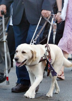 How Do We Define A Service Animal? Walmart was Sued Because of this Issue