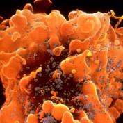 orangelibralady profile image
