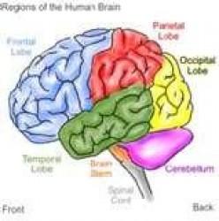 Increasing brain memory power