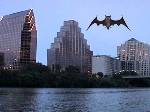 Cruise along and watch the Austin bats!