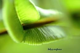 close-up of a fern leaflet