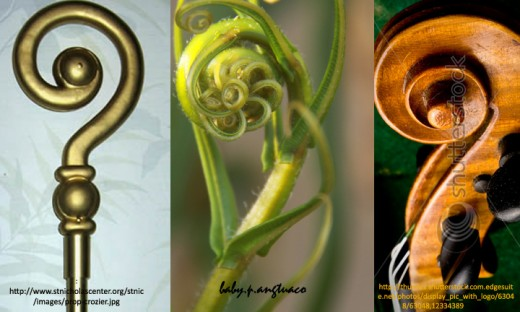 Crozier -Fern- Fiddlehead                                  Left and Right Photos from stnicolascenter.org and from Shutterstock