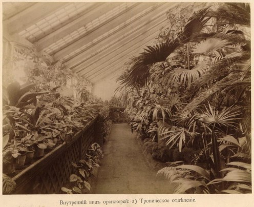 Tropical section of a huge Tomsk State University greenhouse in the Russian Empire, 1890s (public domain).