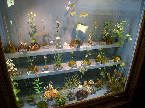 Botanical models built by George & Paul Marchand; Buffalo NY Museum of Science (public domain).