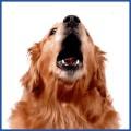 Bark Off Dog Barking Control