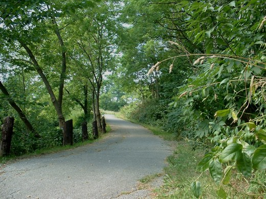 Walking path - Photo by timorous