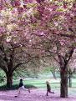 A pink wonderland !!