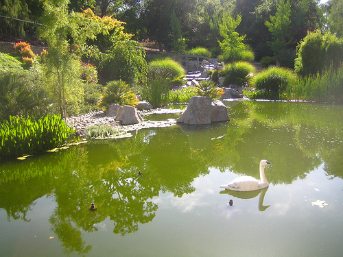 A pond. Not plastic, but hey...
