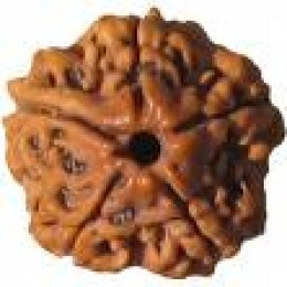 Rudraksha Beads Therapy brings better results than Magnetic Therapy in Curing Diseases