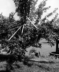 Make Barren Fruit Trees Bear