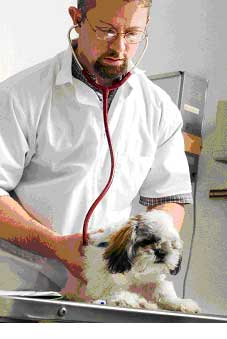 Veterinarian Examines Healthy Dog