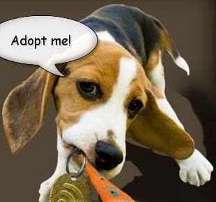 Adopt a Pet in Singapore