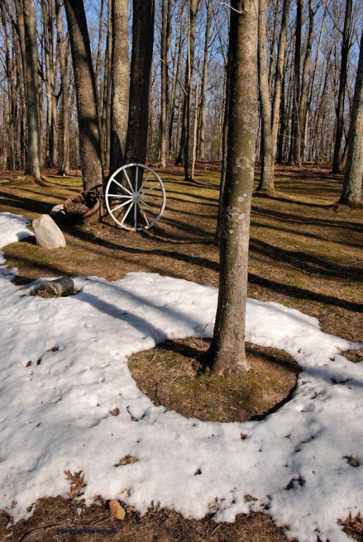 I like the accidental symmetry of the hole of snowless ground echoed by the farm wheel in the background.