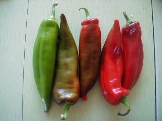 Anaheims are a large chili pepper commonly found in grocery stores throughout the United States.  They are related to New Mexican Chilies and have the same Scoville rating, ranging 1000-2000 units.