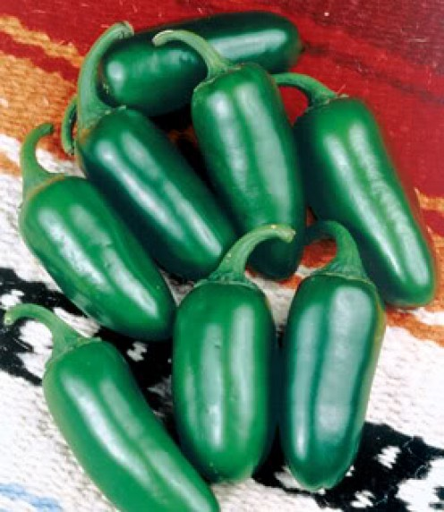 Jalapeno Peppers, another common chili, are smaller and hotter than the Anaheim.  Their Scoville rating is 2,500-8000 units.