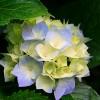 donnaj50 profile image