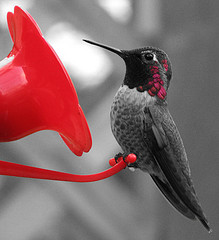 Another satisfied Visitor to a garden feeder.Make sure the Feeder is immaculately clean.