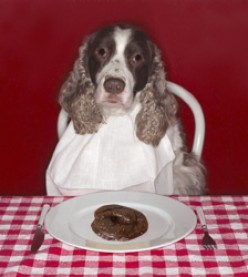 How to cure your dog of Coprophagia - Eating Its Own Poo