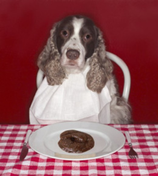Coprophagia spaniel
