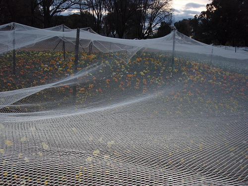 Fruit Netting with ... Flowers