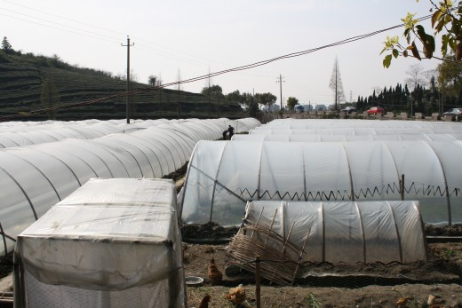 Bamboo frames for plastic domes for growing plants