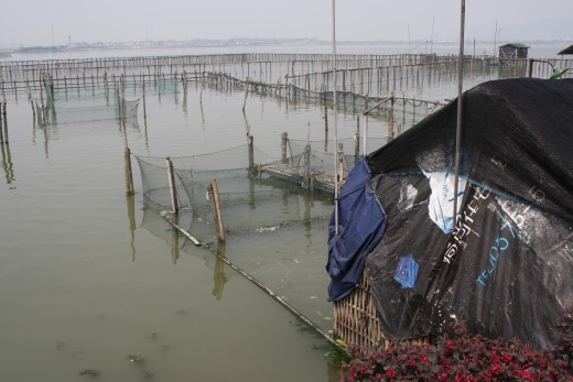 Bamboo in Fish farm