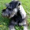Max Harlow profile image