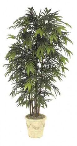 Bamboo Palm - The Beautiful Lovable Palms