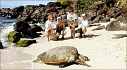 turtle on a beach