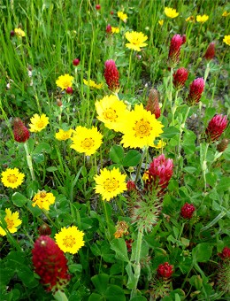 Wildflower photo