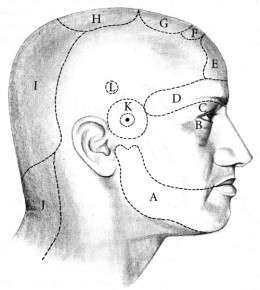 The 107 points or marmas on the scalp that are connected to the vital organs.