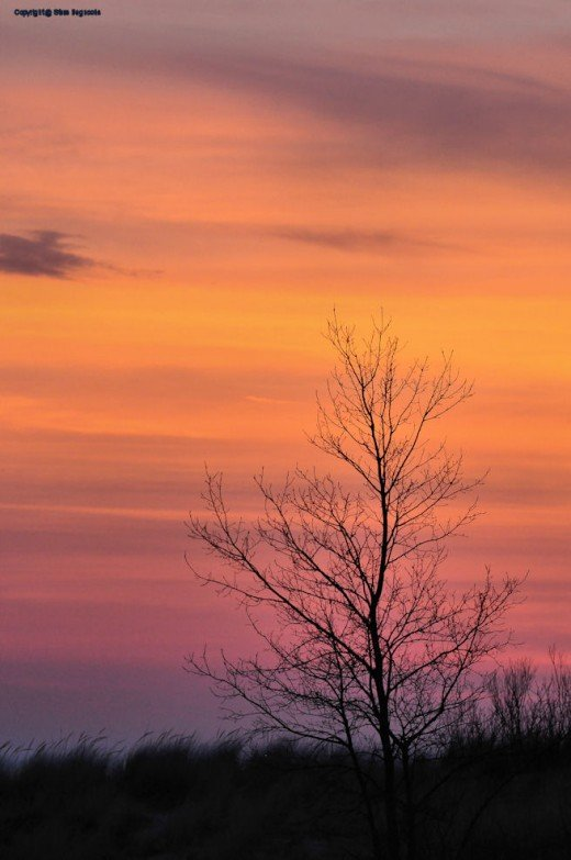 A tree is silhoutted at sunset.