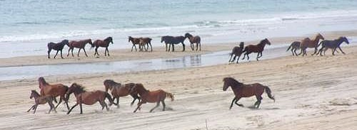 Mustangs of Currituck