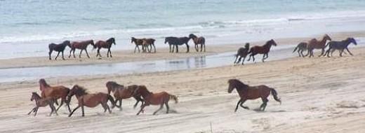 Mustangs of Currituck