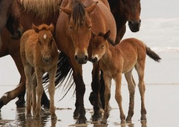 A New Generation of Mustangs