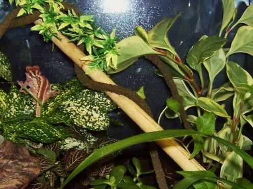 how to build a vivarium