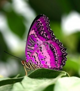 As miraculous as a caterpillar becoming a butterfly...your reality shifts from chaos, fear, pain and suffering to love, peace, harmony and purpose. All things are possible.  Miracles are simply things we don't understand yet.