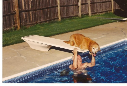 Golden retreiver wants to join her master in the pool.