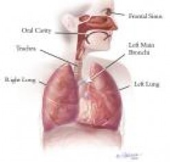 Diseases and Disorders of the Respiratory System