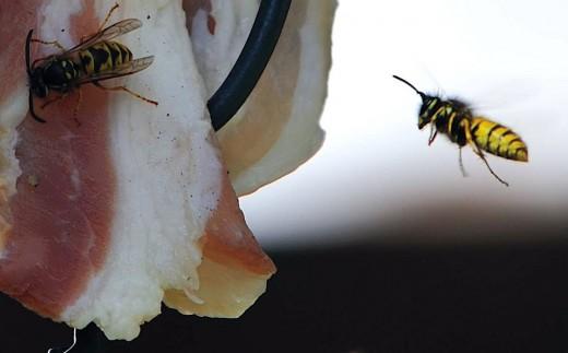 Wasp in Flight