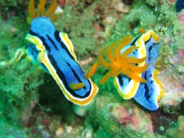 Explore its diverse and fascinating marine life