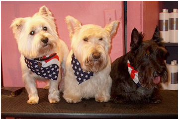 Some of my groom dog friends