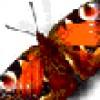 brayan-peter profile image